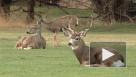 Трупы оленей помогли членистоногим и растениям