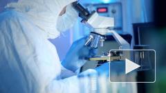 Нидерландские ученые открыли антитело, которое убьет коронавирус