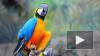 Ученые доказали, что попугаи понимают теорию вероятности