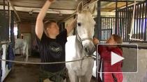 Как в пригороде Петербурга возрождают знаменитую орловскую породу лошадей