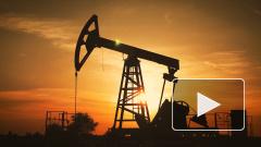"""Bloomberg: в ОПЕК считают, что """"золотой век"""" добычи сланцевой нефти для США завершен"""