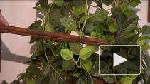 Полезные для здоровья пряности  и травы
