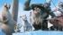 """Мультфильм """"Ледниковый период 4: Континентальный дрейф"""" начинает охоту за кассовыми сборами в России"""