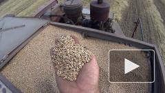Цены на российскую пшеницу упали