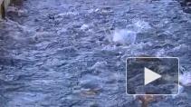 Ловись, рыбка... Российских морепродуктов хватит на всех