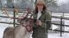 К Рождеству британцы арендуют оленей