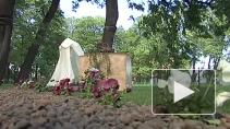 Сады Великого Шелкового Пути воссоздали в Петербурге