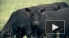 Как производят натуральные молочные продукты