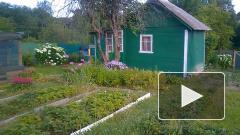В Ленинградской области на четверть подешевела аренда дач