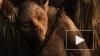 """Ради фильма """"Хоббит: Нежданное путешествие"""" изменили ..."""