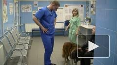 Кетаминовый скандал в Петербурге закончился сроком ветеринару и угрозой рынку ветуслуг