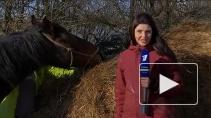 """Чудеса случаются: будни подворья """"Спасение лошадей"""" и новые проекты"""