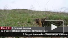 В Западной Монголии объявлен карантин из-за бубонной чумы