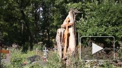 В Одессе женщину убило упавшим деревом