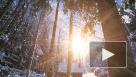 Росгидромет пообещал аномально теплый март