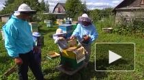 Наше все - пчелы