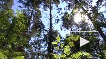 Не стать свалкой: как спасти экологию островов Вуоксы
