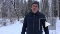 2019-й - Год здорового образа жизни в Ленинградской области