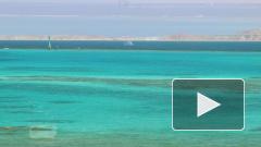 В Красном море нашли источник токсичных газов