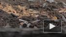 ЛНР начала вооруженное наступление в Донбассе