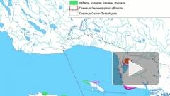 Сегодня в Петербурге решится судьба намыва в Финском заливе около Сестрорецка
