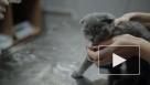 В китайском Ухане коронавирус обнаружили у бездомных кошек