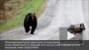 3 тысячи финских солдат испугались медведя