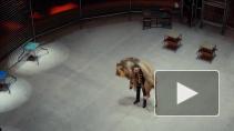 Львы и полет под куполом - секреты знаменитого дрессировщика Гончарова и его цирковой  семьи