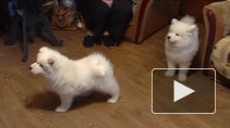 Сильные и добрые: собаки северной закалки