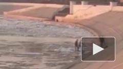 Дети прыгали по льдинам в Омске