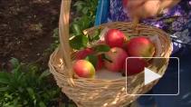Аграрный вопрос: у кого лето год кормит?
