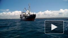 В Дагестане могут построить крупный завод по переработке рыбы