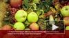 Россия запретил ввоз молдавских растительных товаров ...