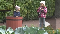 Сезон фонтанов в Летнем саду завершился праздником урожая