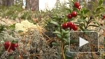 Заповедные тропы Карелии.Тайга и новый вид туризма