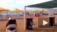 Задержанные в Крыму диверсанты собирались покончить с местным туризмом
