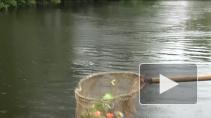 Опасный пластик, донные отложения и разливы нефти. Как проходит очистка городских водоемов?