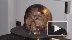 Ученые назвали причину сохранности мозг возрастом 2600 лет