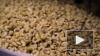 Ученые: Орехи помогут предотвратить ожирение