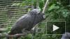 Учёные обнаружили у птиц склонность к альтруизму