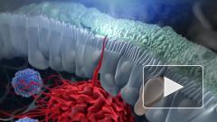 Ученые обнаружили у иммунных клеток способность отслеживать количество макрофагов