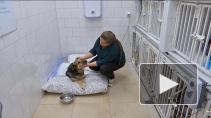 Животные с трудной судьбой. Кто и как помогает бездомным собакам и кошкам?