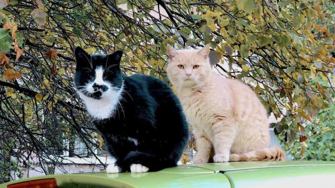 Кормить кошек свежей рыбой опасно
