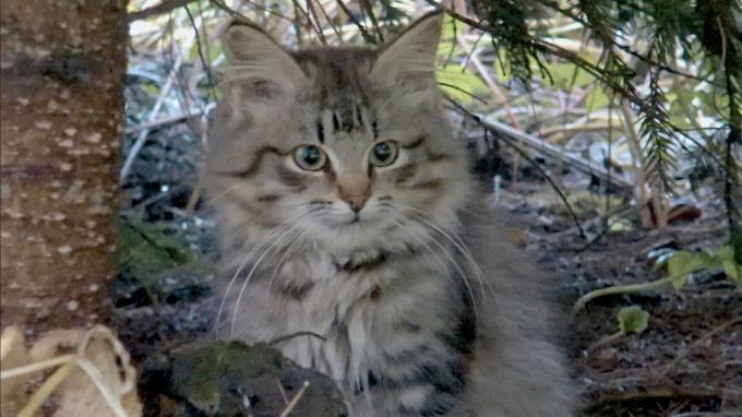Кормить кошек рыбой опасно