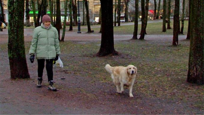в Выборге появится площадка для выгула собак