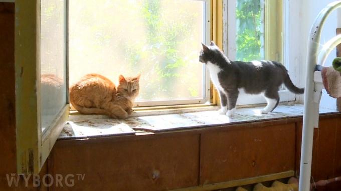 Приют для кошек Выборг