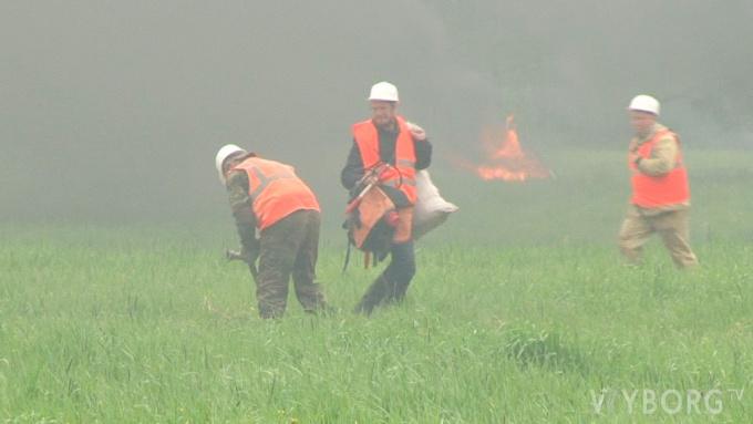 Учения по тушению лесного пожара под Выборгом