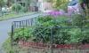 Одинокий педофил из Владимирской области напал на двух 11-летних мальчиков, когда они собирали ягоды в лесу