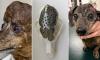 Канадские врачи напечатали собаке новый череп на 3D-принтере