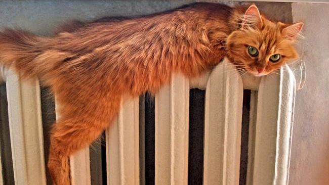 Стало известно, когда в Петербурге отключат отопление